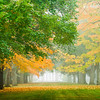 Morning Foliage