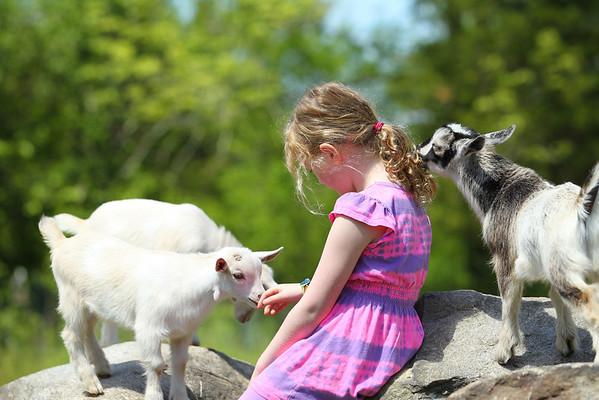 Girl & Baby Goats