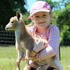 Seven-Year girl and baby goats.